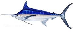Offshore fishing charters gulf stream deep sea fishing for Deep sea fishing atlantic city